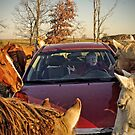 """No No, Not More Horses, More Horsepower!"" by Melinda Stewart Page"