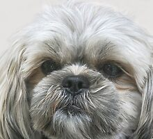 A Shaggy Dog by heatherfriedman