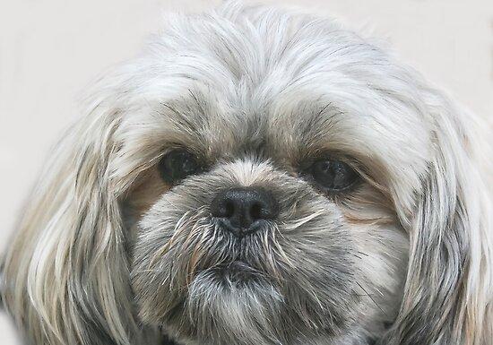 A Shaggy Dog by heatherfriedman