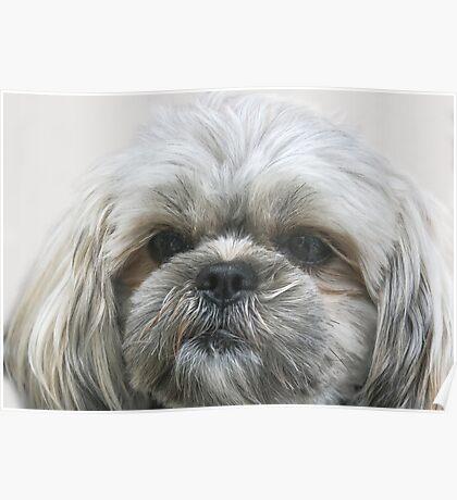 A Shaggy Dog Poster