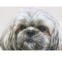 A Shaggy Dog Photographic Print