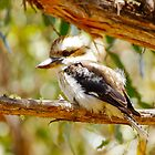 Ron's photo of the baby kookaburra by Alenka Co