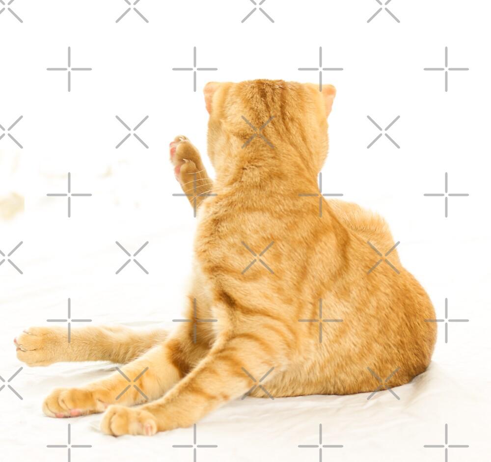 Cat yoga by Mira Fertin