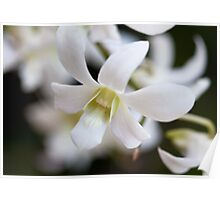 Pure Orchid Poster