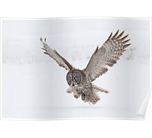 Great Gray Owl. Poster