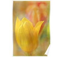 tantalising tulips Poster