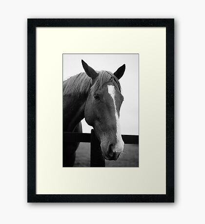 Horse portrait Framed Print