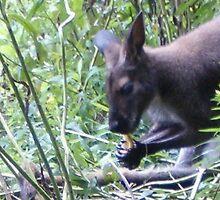 Kangaroo by CandyBond