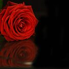 flower reflections II by Nicole W.