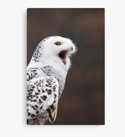 Snowy Owl Attitude ~ Canvas Print