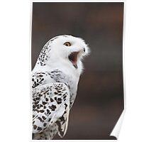 Snowy Owl Attitude ~ Poster