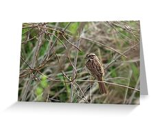 Song Sparrow in Brush Greeting Card