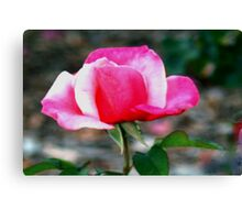 Pink duo Canvas Print