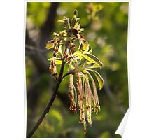 Tree Flowers in April Poster