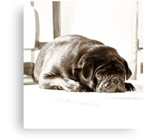 Time For A Nap Canvas Print