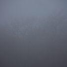 Misty Winter Morning by Lisa Holmgreen