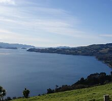 Otago Harbour by Sheryl Marshall