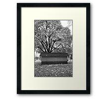 Tree at Green Lake, Seattle, Washington Framed Print
