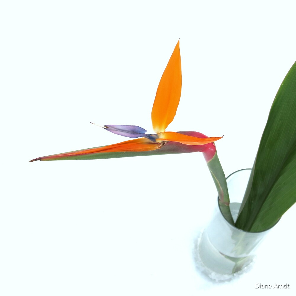 Snowy Bird Of Paradise by Diane Arndt