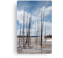 Petrified Trees Canvas Print
