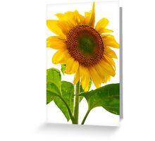 Sunflower Days Greeting Card