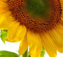 Sunflower Days Sticker