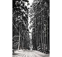 Tall Cold Trees Photographic Print