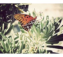 Beach Butterfly II Photographic Print