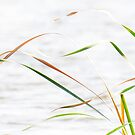ribbons of reeds by nadine henley