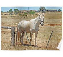 '' OUTBACK HORSE '' Poster