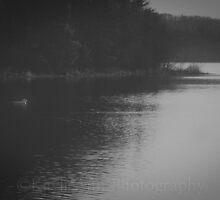 Two Swans by KaylieAnnPhotog