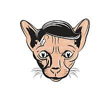 Hairless Cat Denial Photographic Print