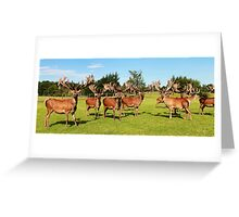 Trophy Antlers Greeting Card