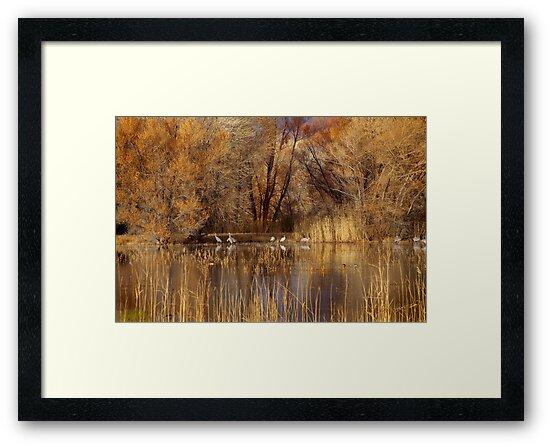 Autumn Relections by Vicki Pelham