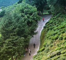 Walk down an exotic tea plantation by hazelong