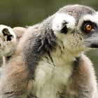 Mother Ringtail and Baby by Gwndorlin