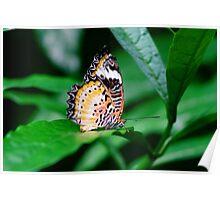 Butterfly Flutter Poster