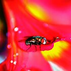 Bright Fly by Izgab