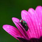 Pink petals by Izgab
