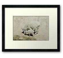 Rocky Mountain goats at a salt lick Framed Print