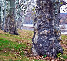 Trees Planted by the River by ginawaltersdorf