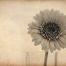 A Single Flower by fernblacker