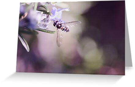Rosemary Robber Fly by jayneeldred
