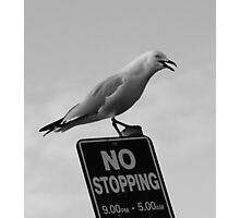 NO STOPPING....OR ELSE!!! Photographic Print