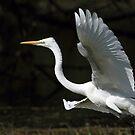 """""""The landing of the Egret."""" by debjyotinayak"""