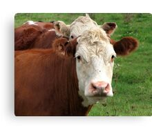 Stay Outta My Pasture Canvas Print