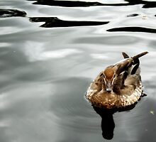 A Little Brown Duck by Vanessa Barklay