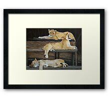 Going, going ....gone Framed Print