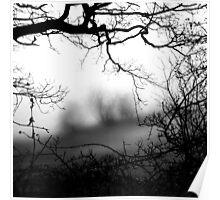 Trees Frame Trees Poster