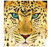 animals  snow leopard 2 art Poster